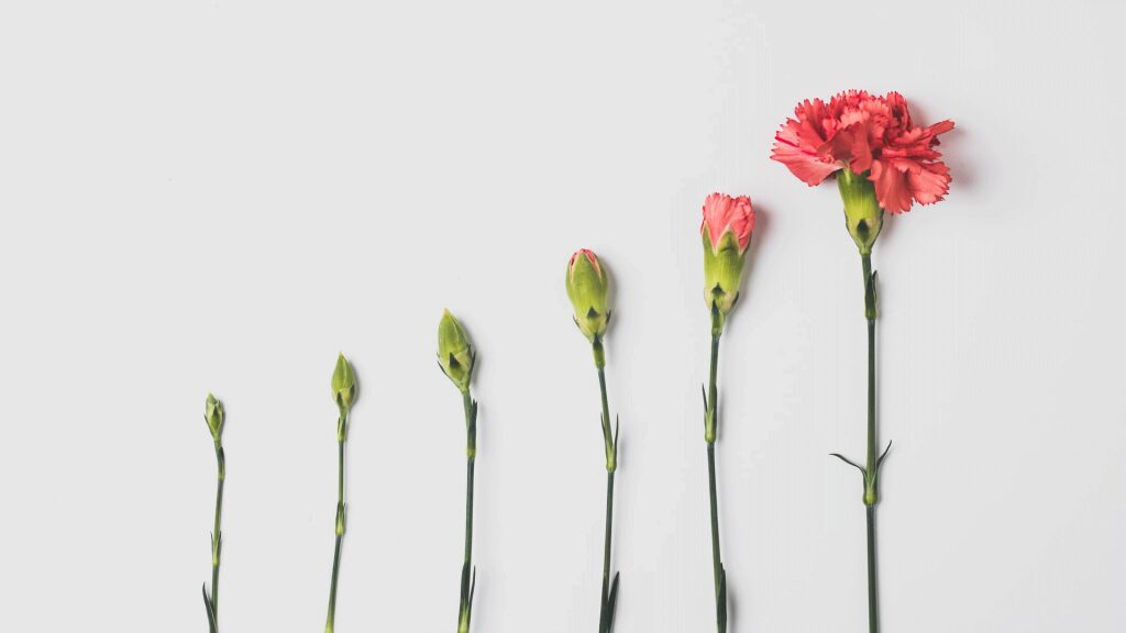 social media hack article cover image of a flower blossoming